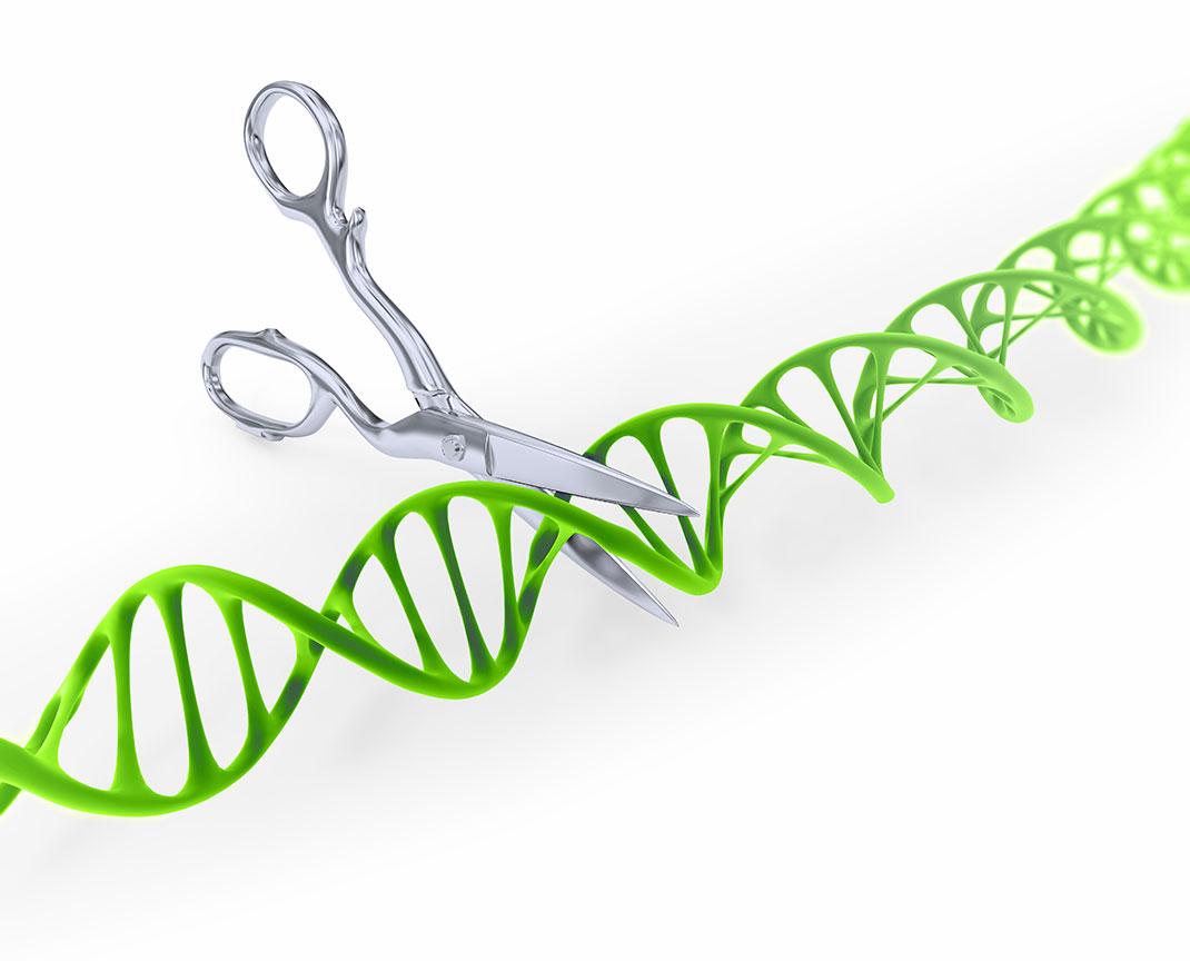 Coupe-ADN-shutterstock-