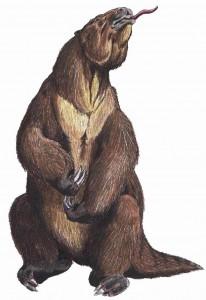 Megatherum-paresseux