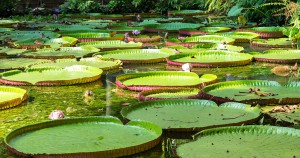 Pantanal-12