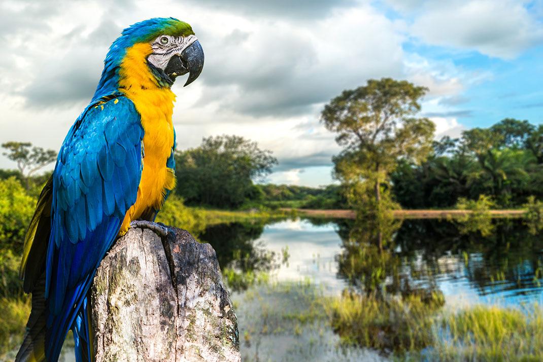 Pantanal-13