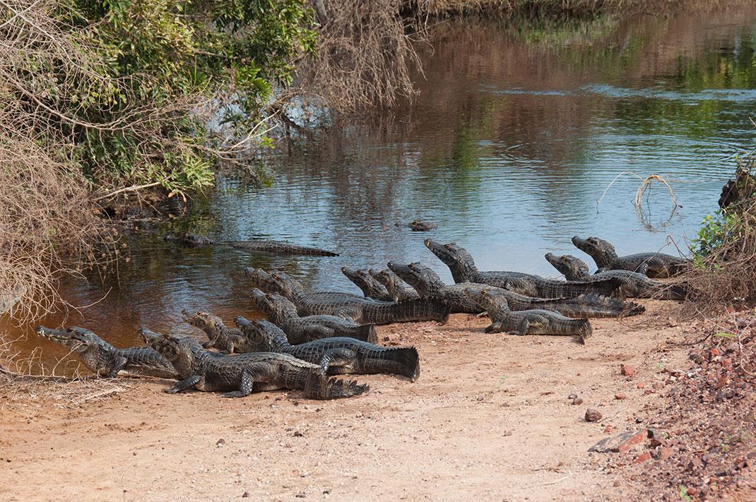 Pantanal-14