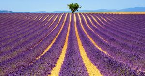 UNE-VALENSOLE-1
