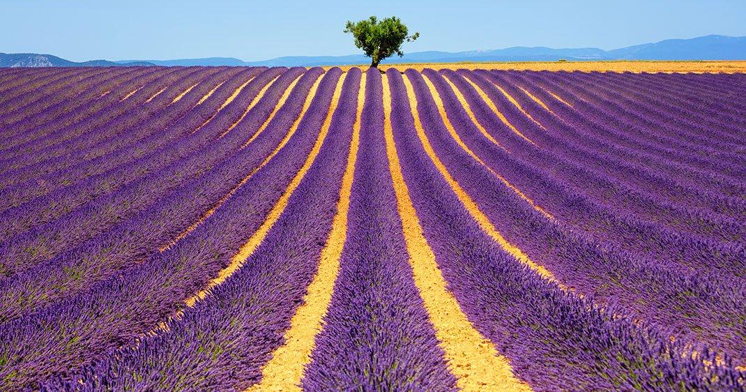 Quel beau pays la France ! UNE-VALENSOLE-1