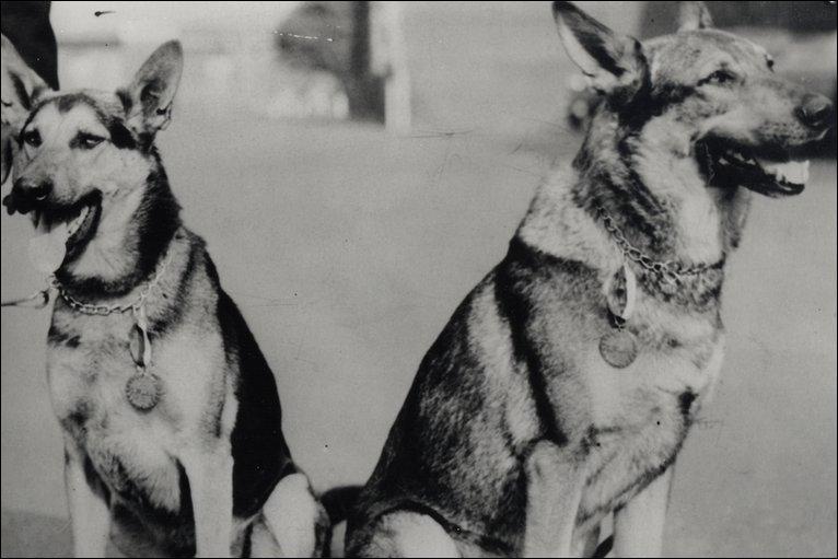 animaux-decores-seconde-guerre-mondiale-1