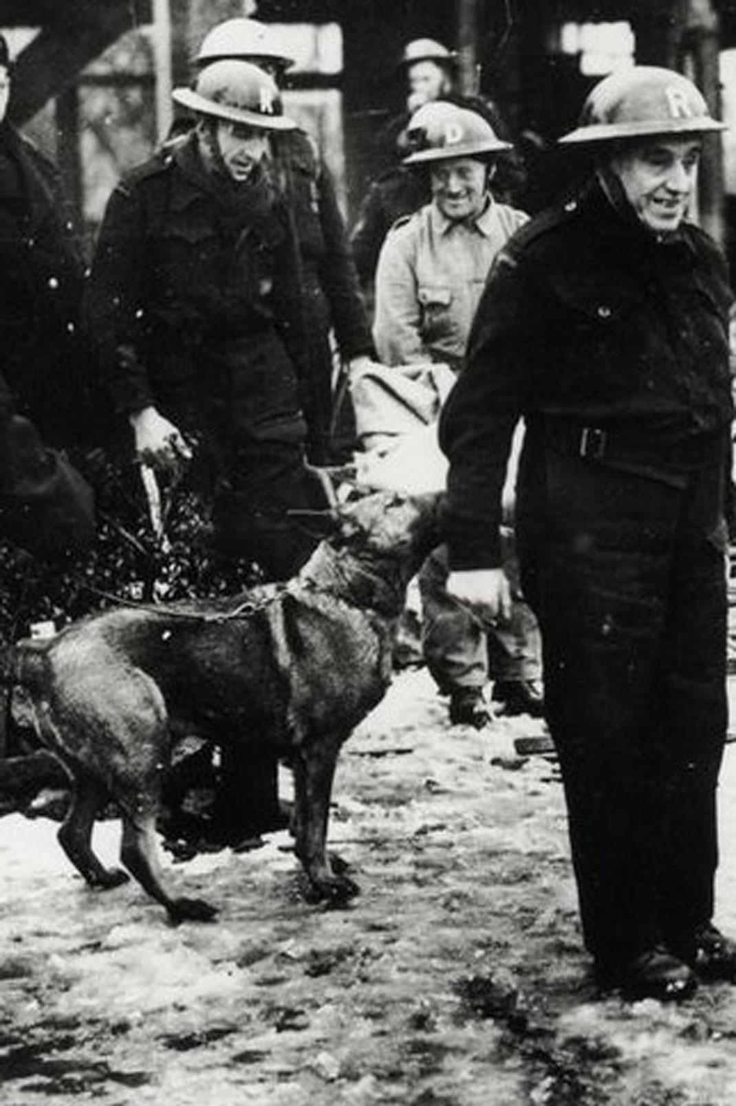 animaux-decores-seconde-guerre-mondiale-2