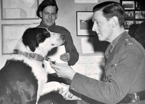 animaux-decores-seconde-guerre-mondiale-3
