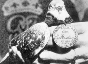 animaux-decores-seconde-guerre-mondiale-9