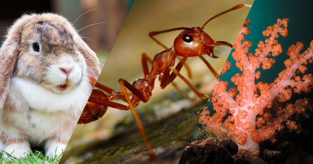 animaux-fecondite-differences-une