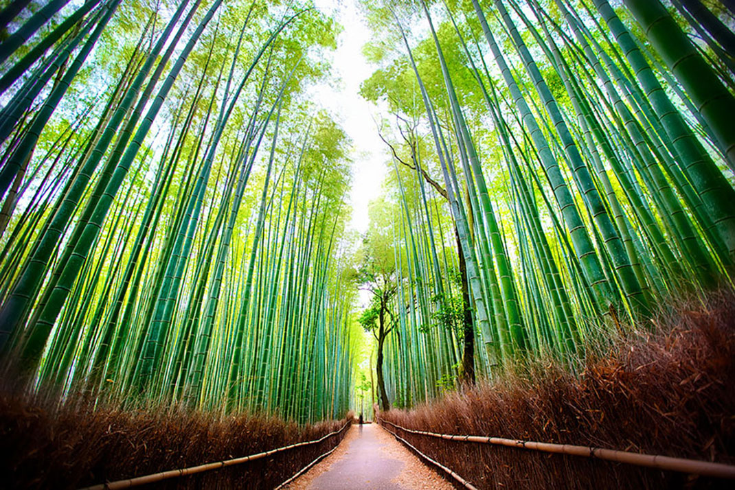 arashiyama-attente