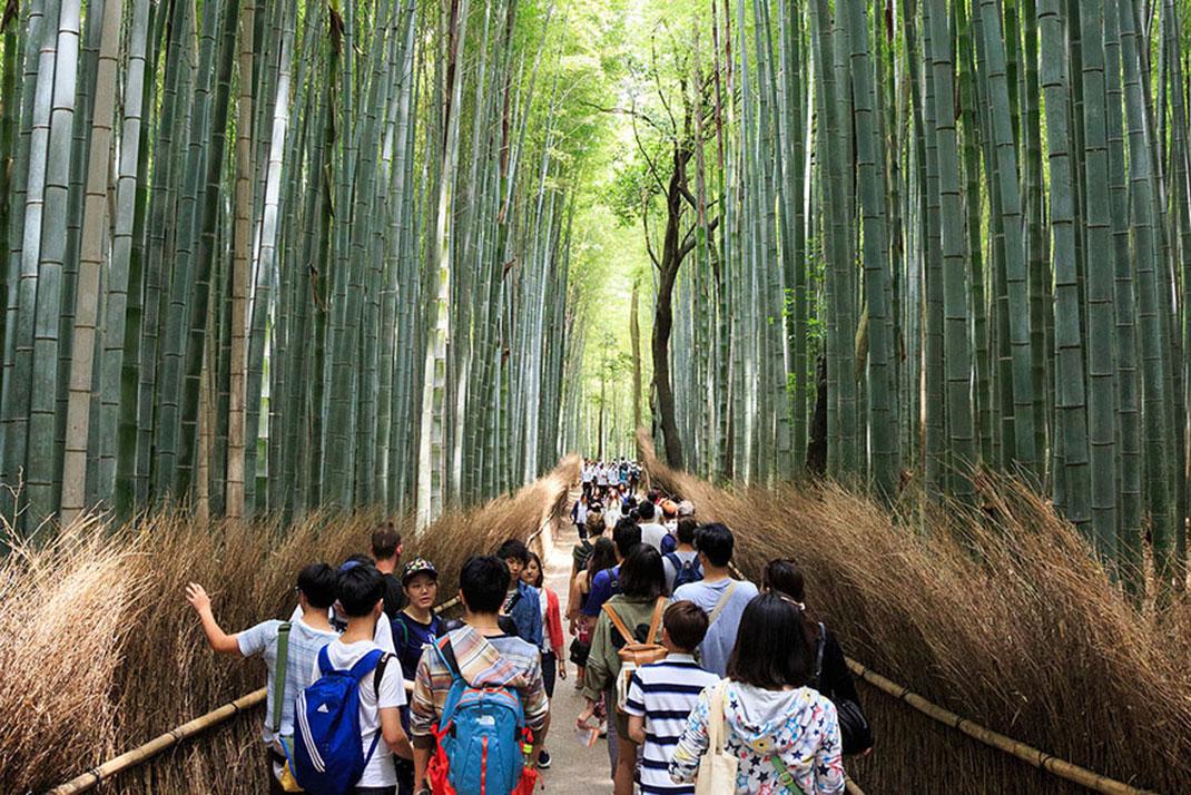 arashiyama-vrai