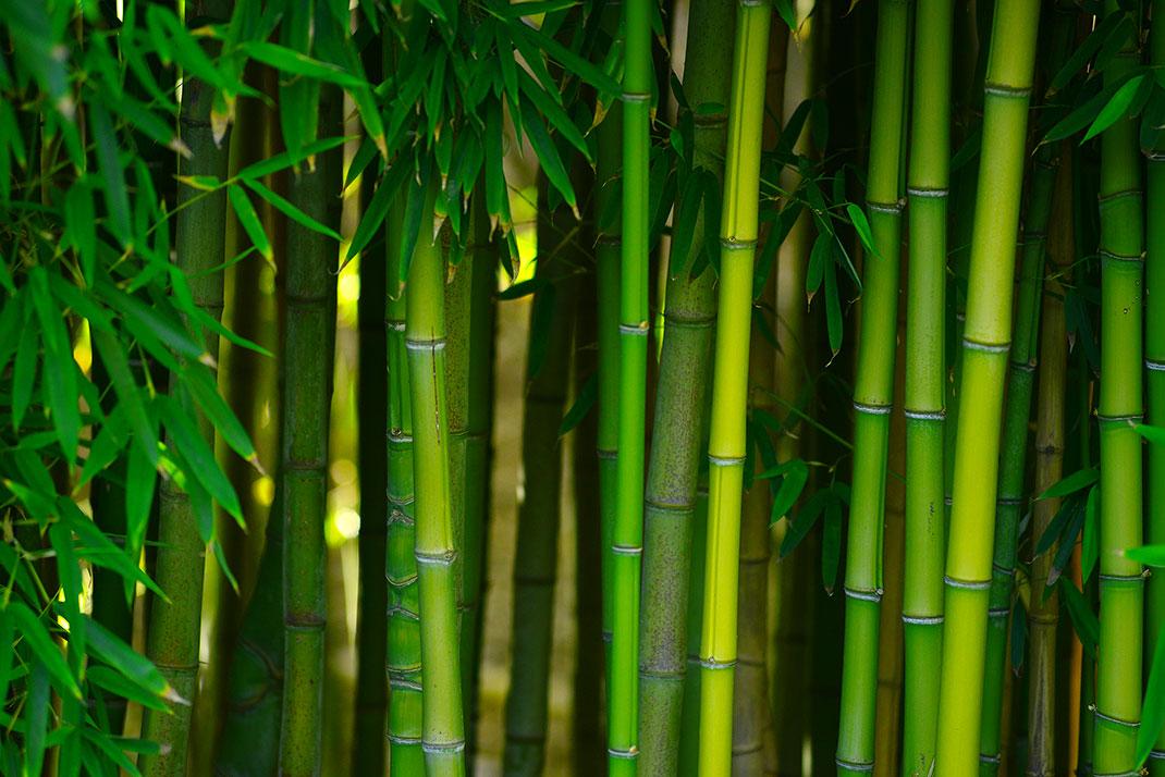 bambous-jardin