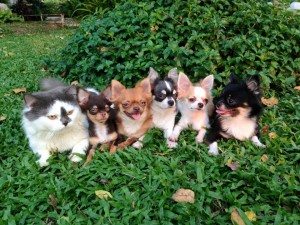 chat-chiens-6