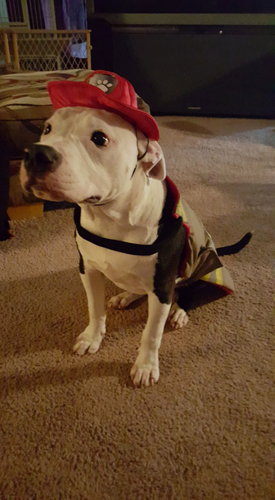 chien-incendie-pompier-10