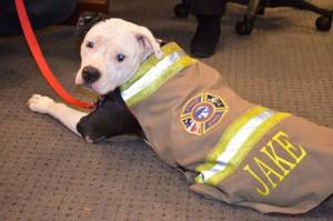 chien-incendie-pompier-3