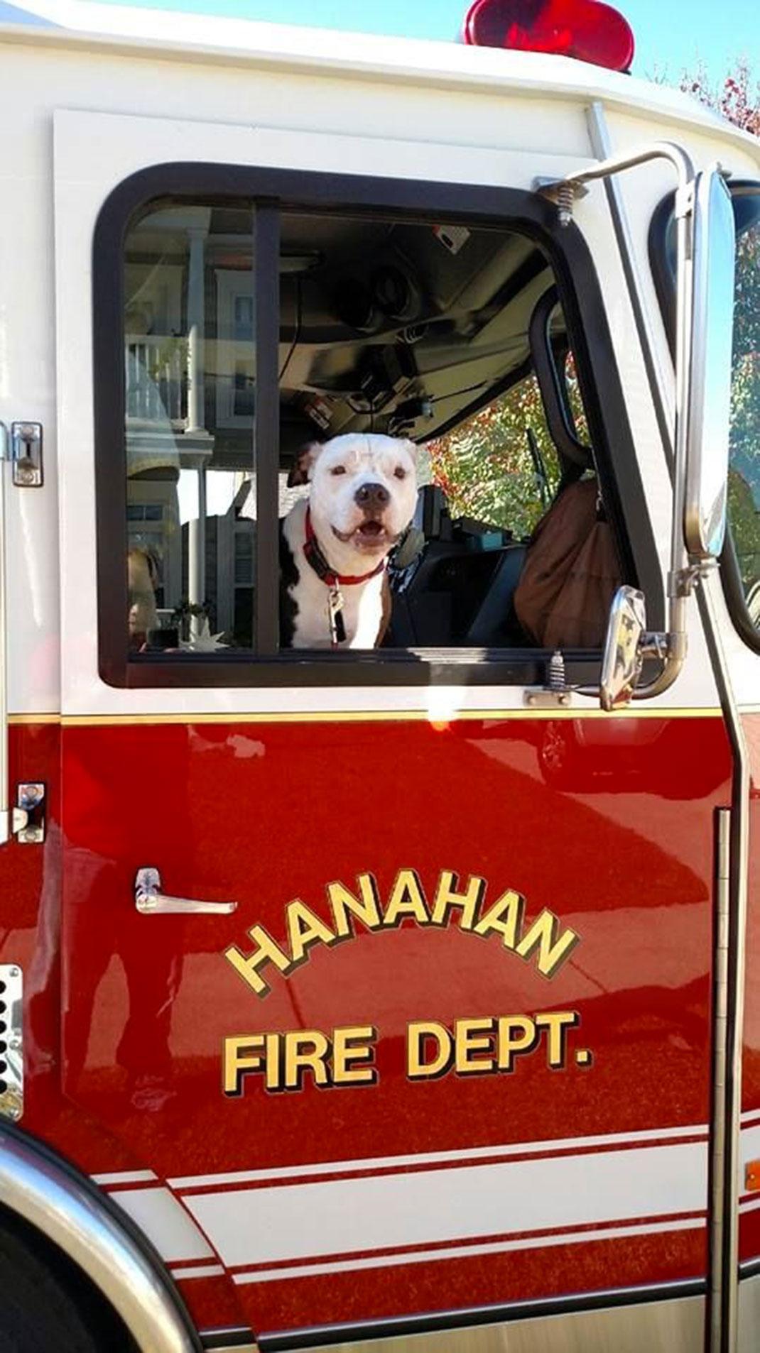 chien-incendie-pompier-5