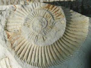 fossils-pierre