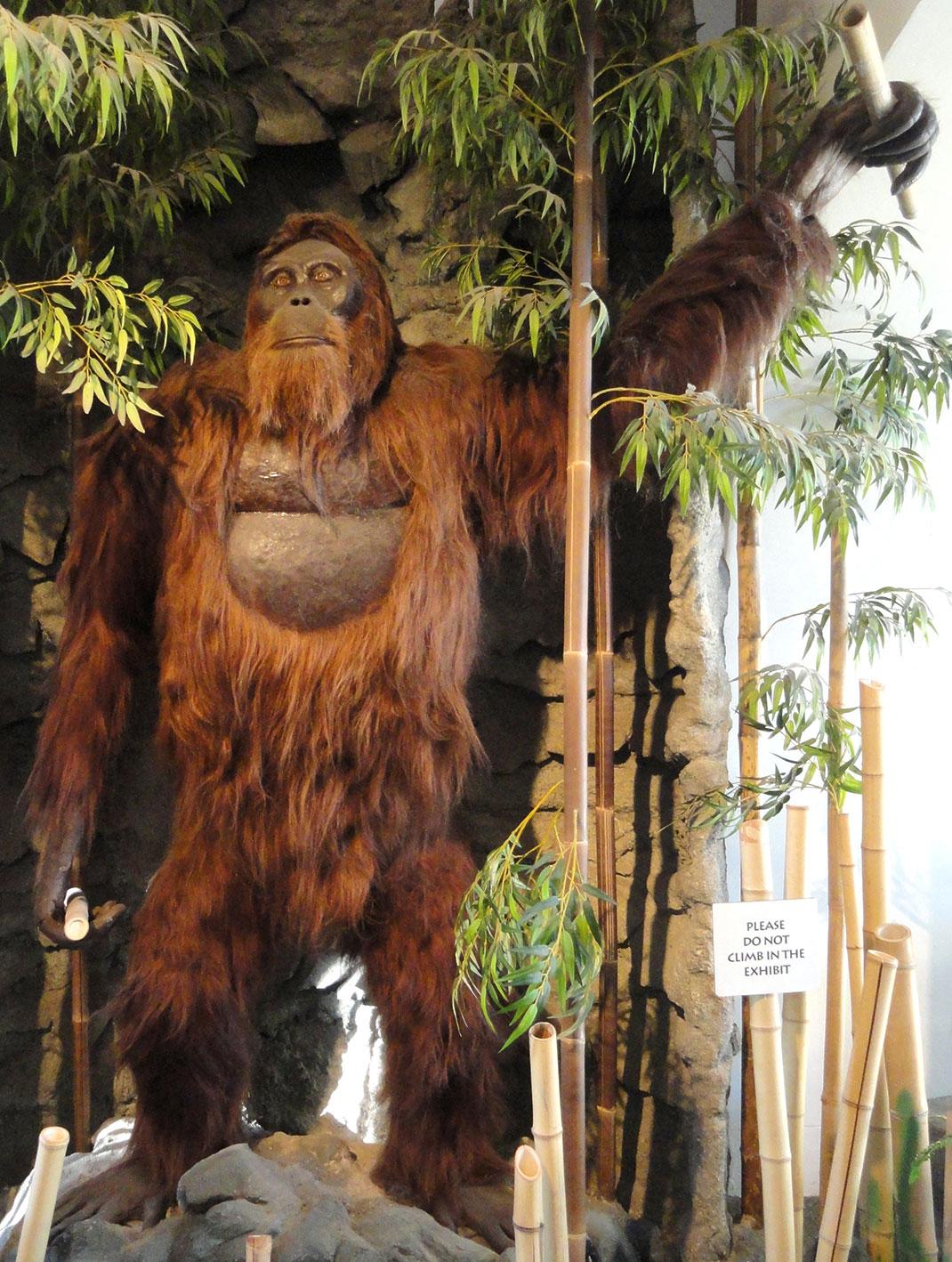 giganthopitheque-primate