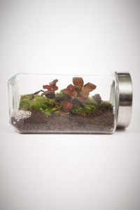 greenfactory-plantes-paris-10