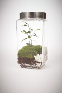 greenfactory-plantes-paris-11