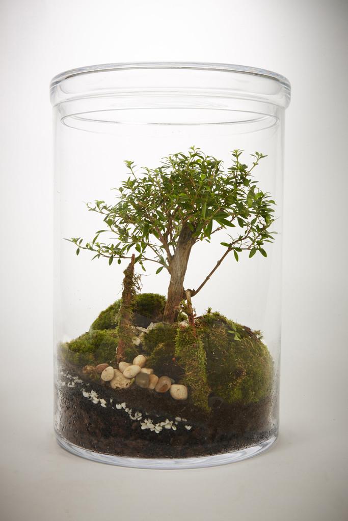 Ces terrariums renferment un v ritable cosyst me for Plante sous verre