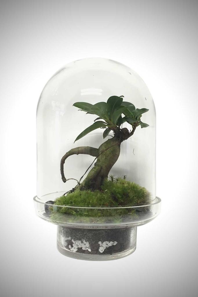 greenfactory-plantes-paris-6