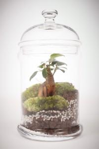 greenfactory-plantes-paris-7