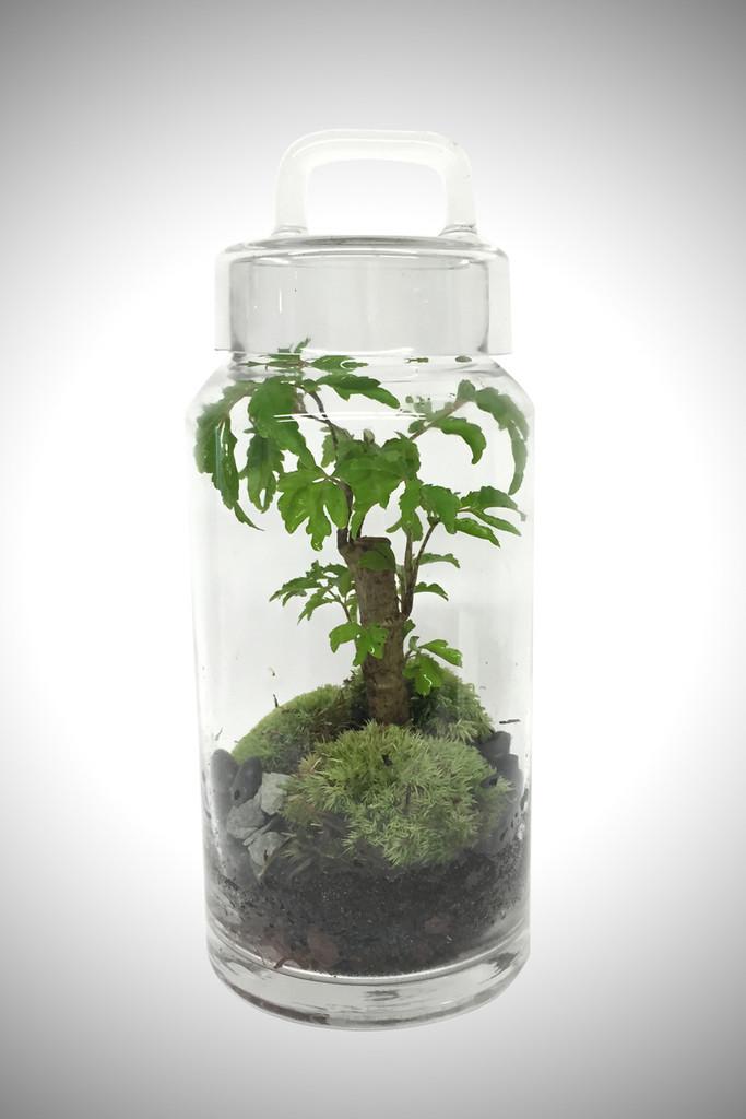 greenfactory-plantes-paris-8