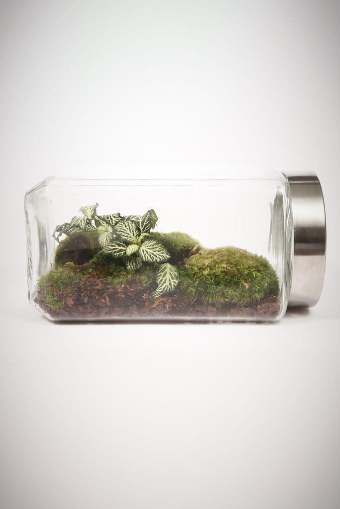 greenfactory-plantes-paris-9