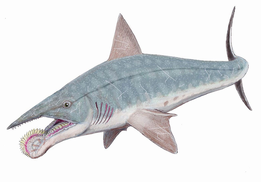 helicoprion-scie