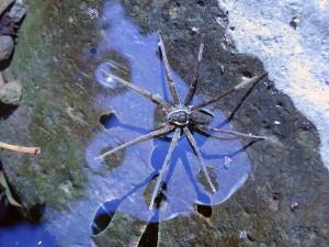 nouvelle-araignee-2