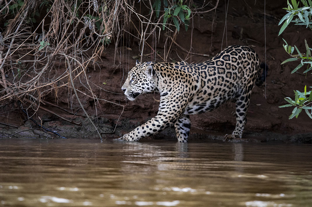 pantanal-15