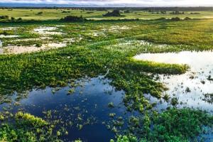 pantanal-6