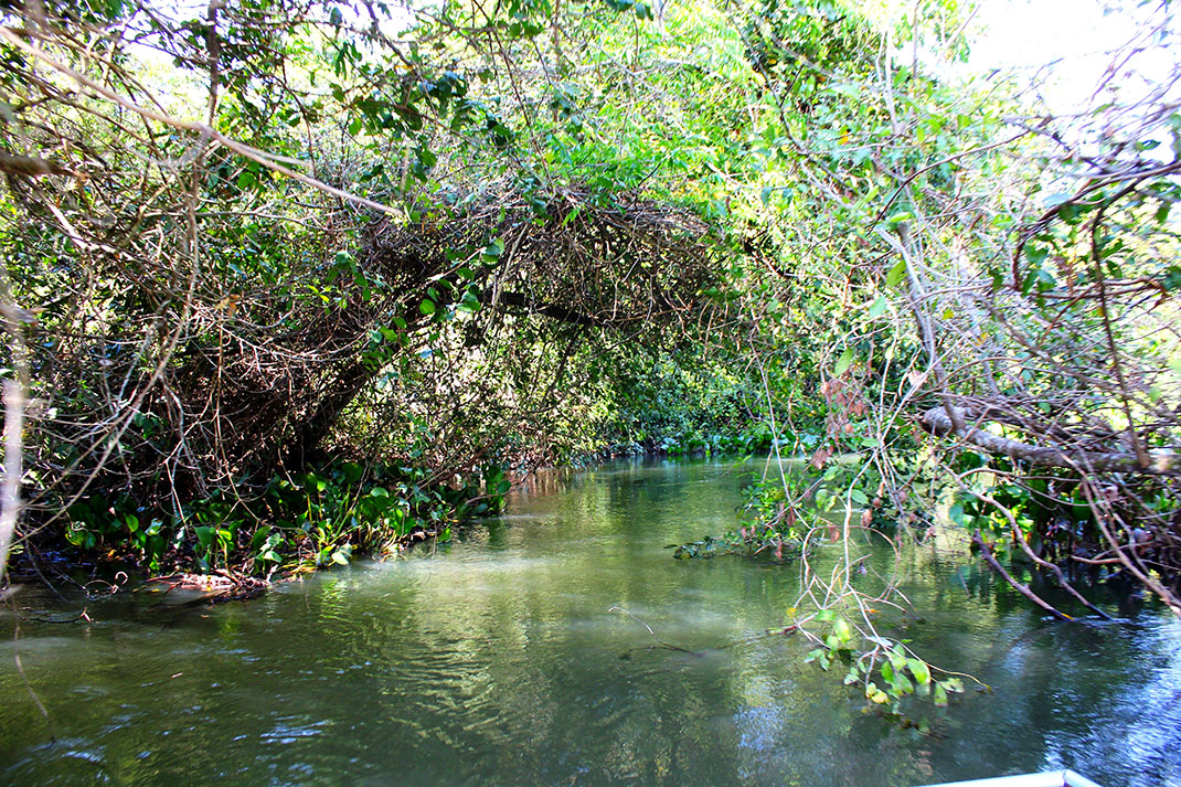 pantanal-7