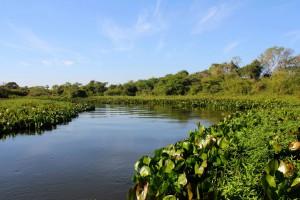 pantanal-8