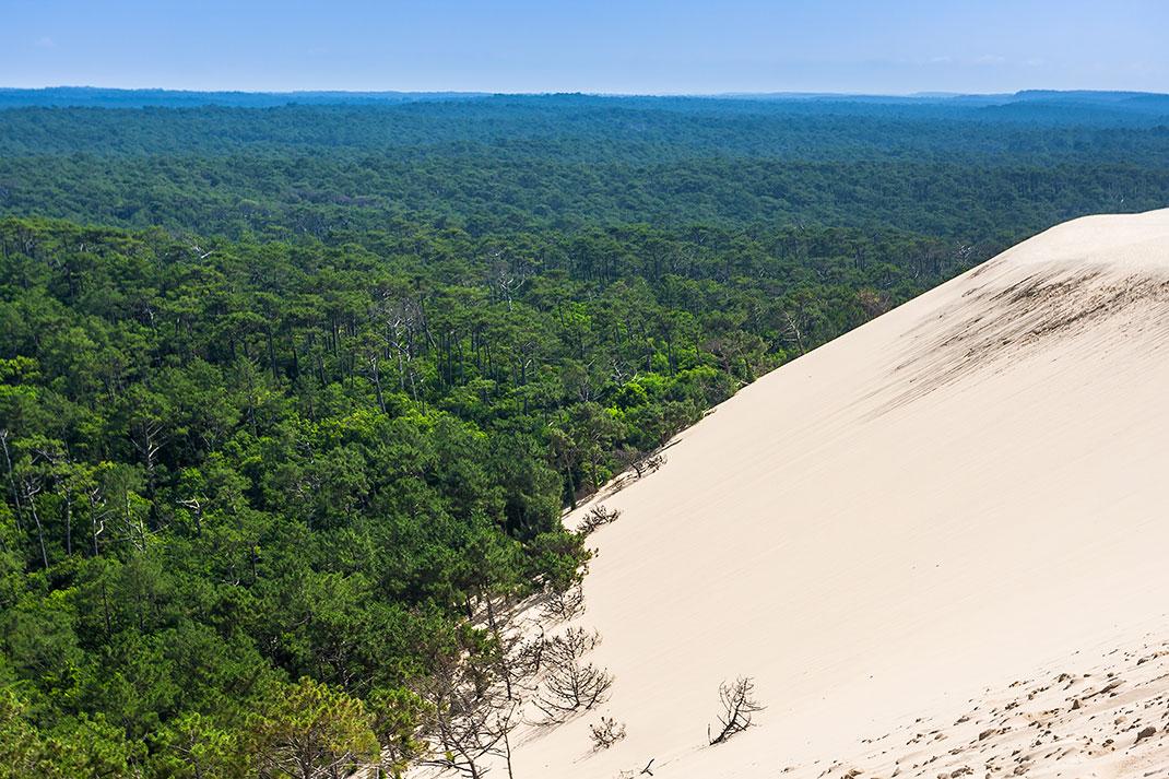 pilat-dune