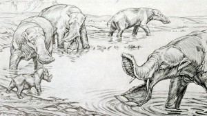 platybelodon-elephant