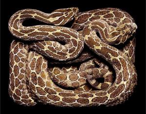 serpent-10