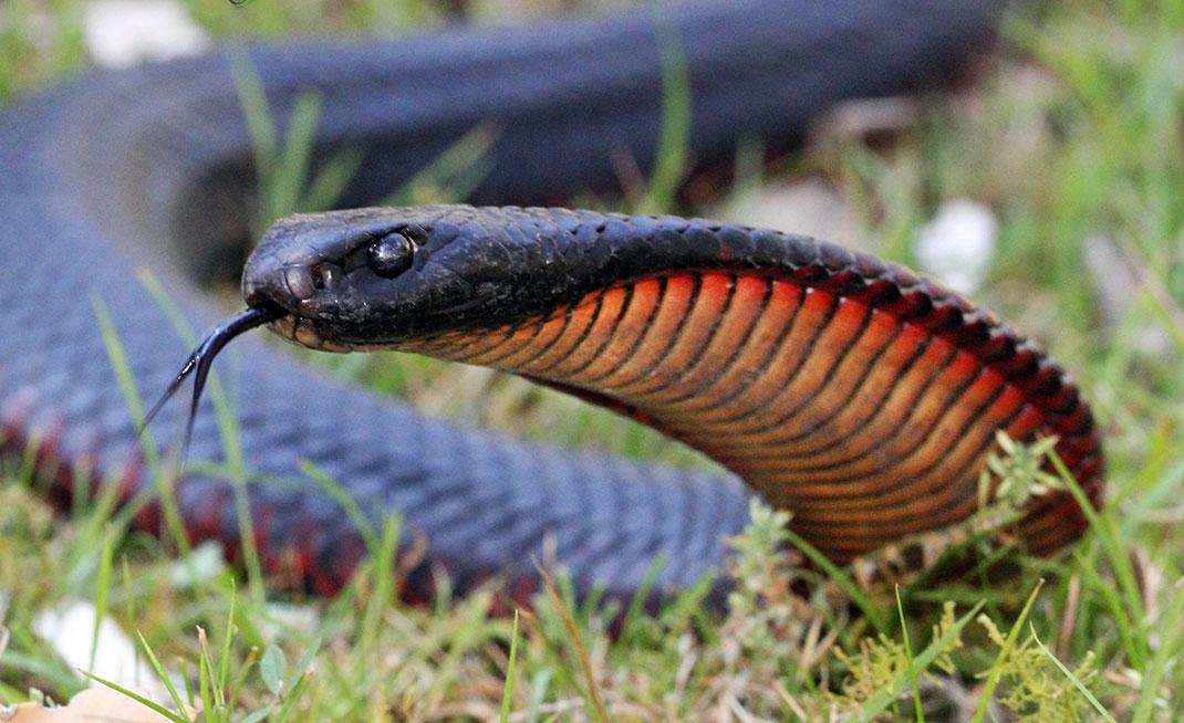 serpent-14
