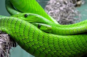 serpent-15