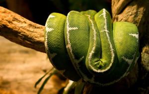 serpent-18