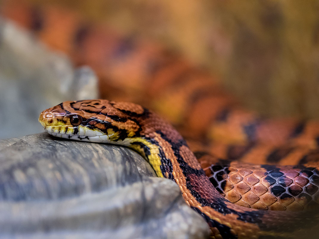 serpent-19
