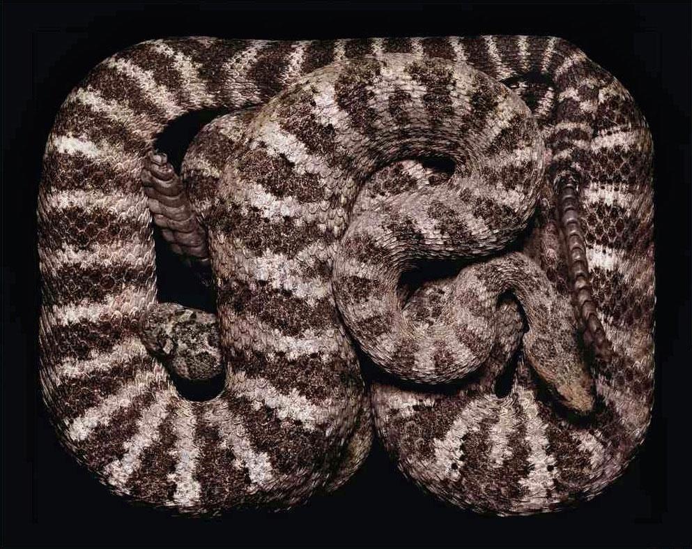 serpent-2