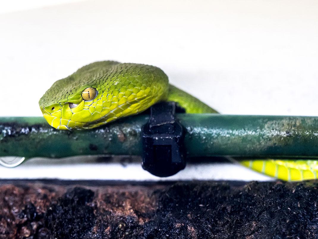 serpent-20