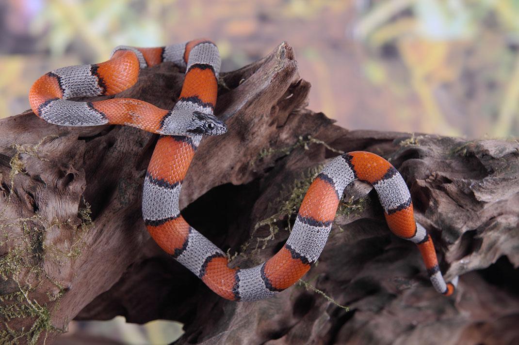 serpent-21