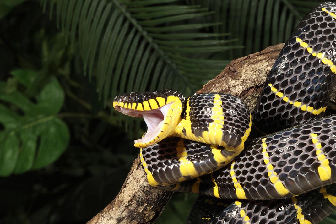 serpent-23