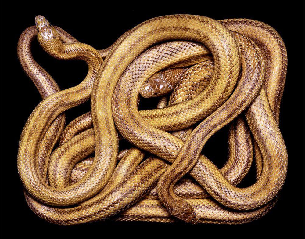 serpent-4