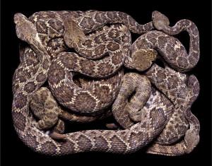 serpent-9