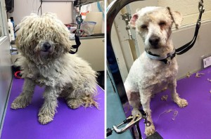 shelter-dog-before-and-after-2