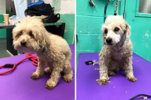 shelter-dog-before-and-after-3
