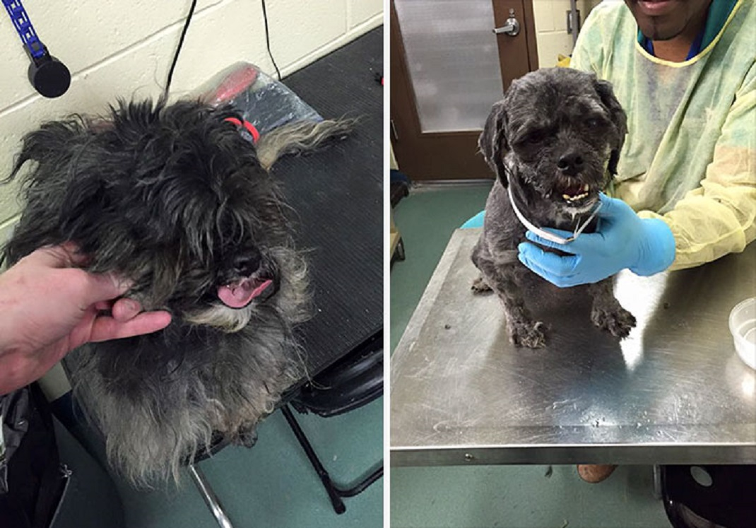 shelter-dog-before-and-after-4